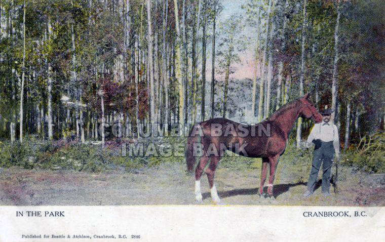 Postcard - In The Park - Cranbrook, BC
